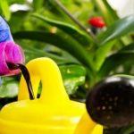 Фото подкормки орхидеи_главная