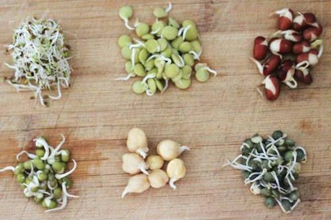 Фото скарификации семян