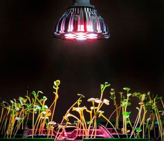 Фото лампы над растениями