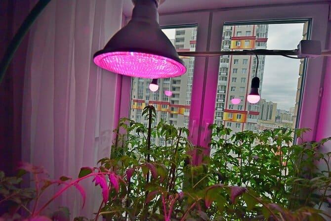 Фото лампы