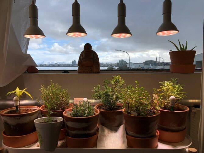 Фото ламп для растений