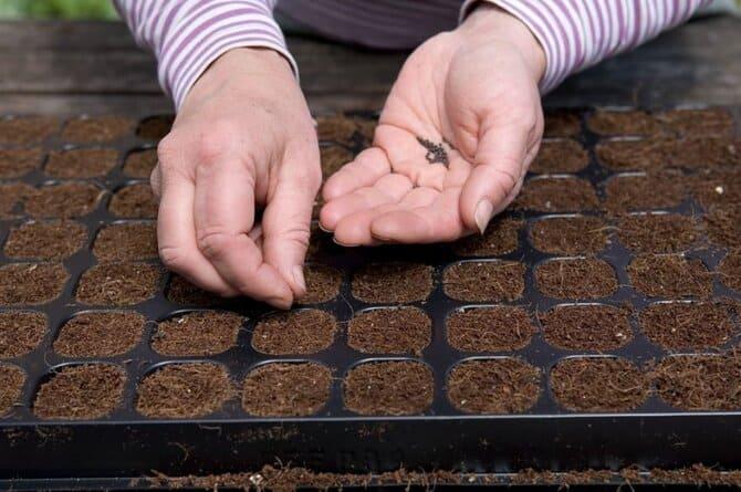 Фото посева семян