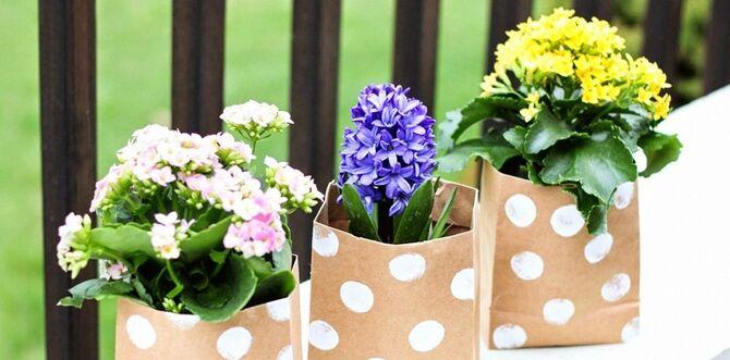 Фото цветков в горшке