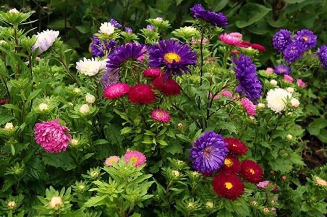 Какие цветы сеять на рассаду в апреле 2021 года по лунному календарю