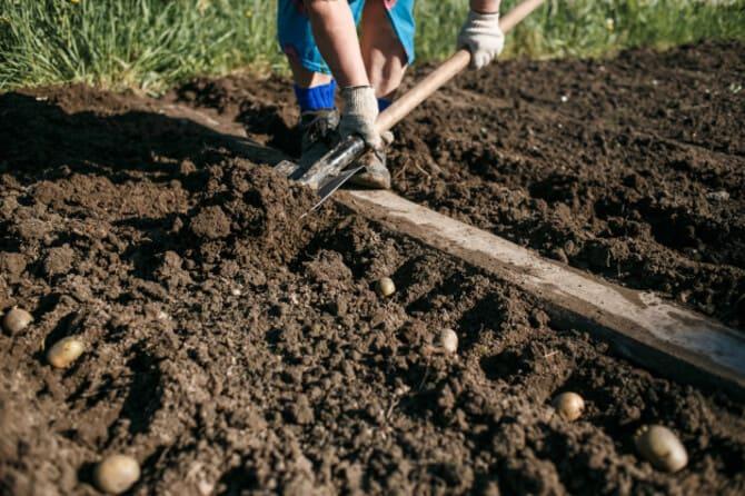 Фото посадки под лопату