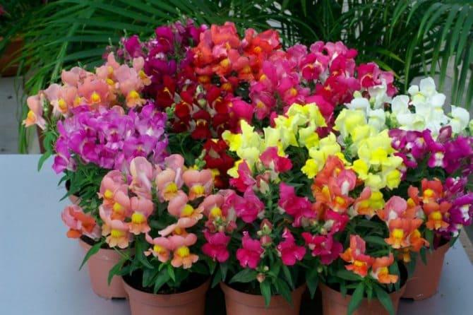 Какие цветы посадить вдоль забора, чтобы цвели все лето