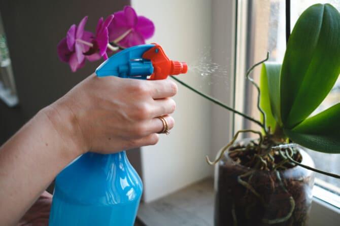 Фото опрыскивания орхидеи