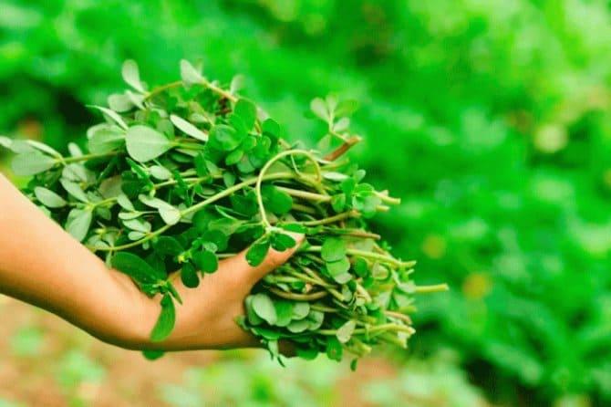 Фото сорняков в руке