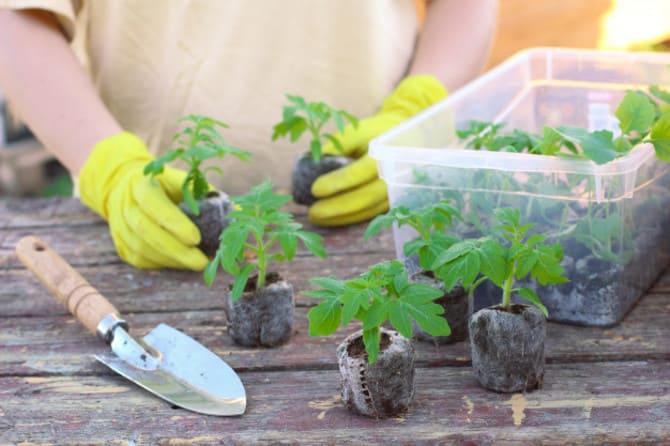 Фото томатов в таблетках