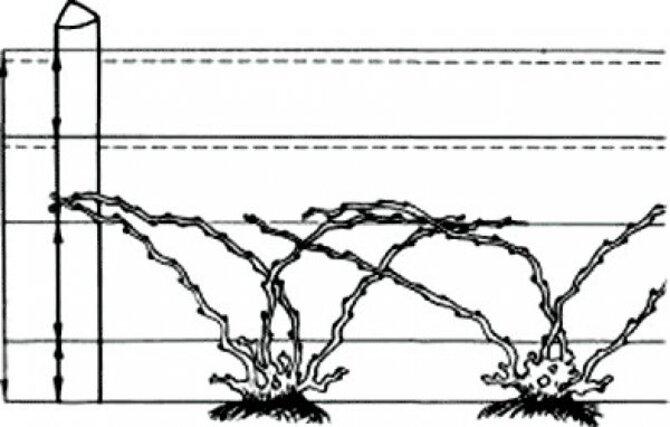 Схема безрукавной обрезки