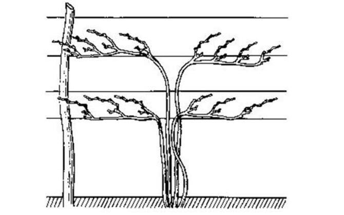 Схема многосторонней обрезки