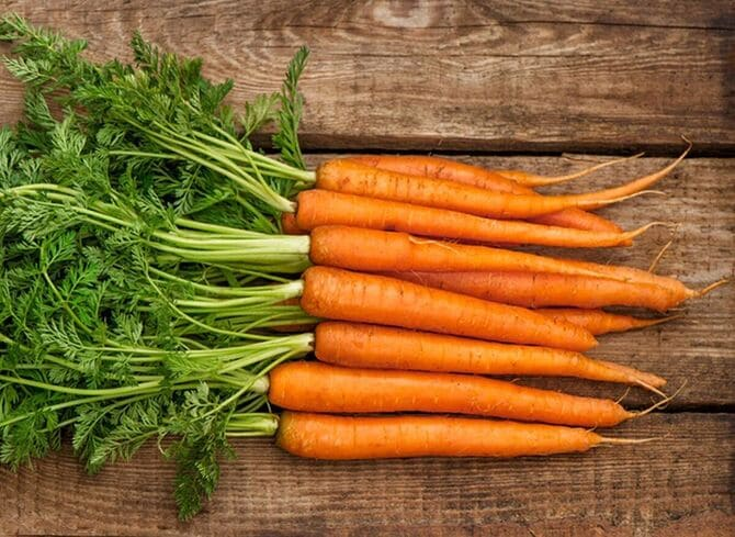 Фото моркови