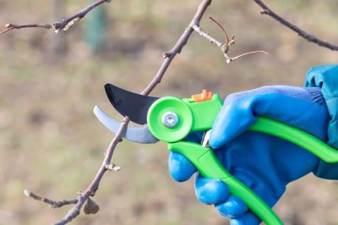 Фото обрезки деревьев