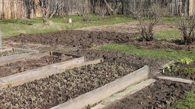 Фото огорода в апреле