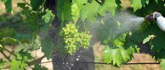 Фото опрыскивания винограда_главная