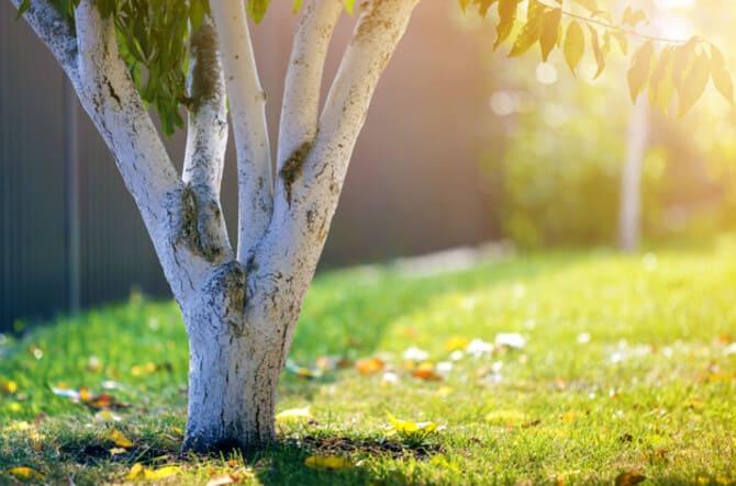 Фото побеленного дерева