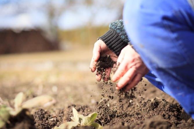 Фото почвы для картофеля
