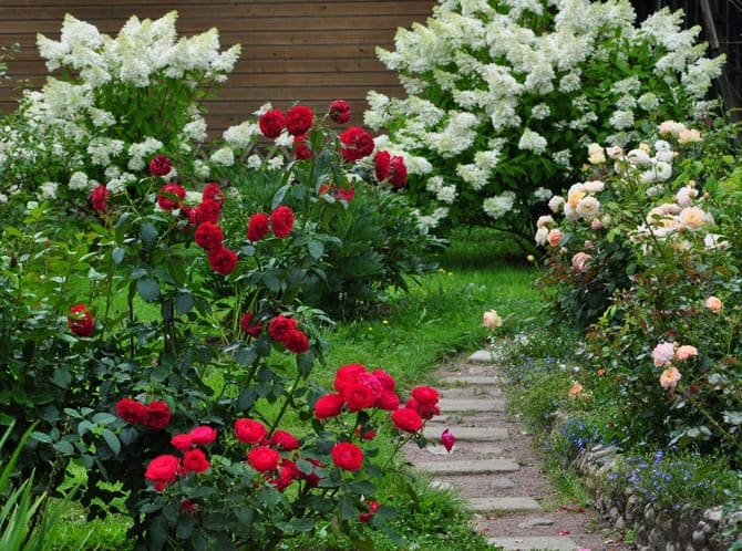 Фото розы и гортензии