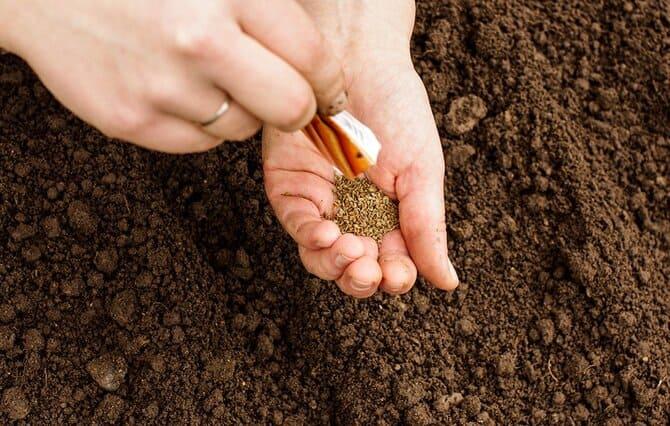 Фото семян в руке