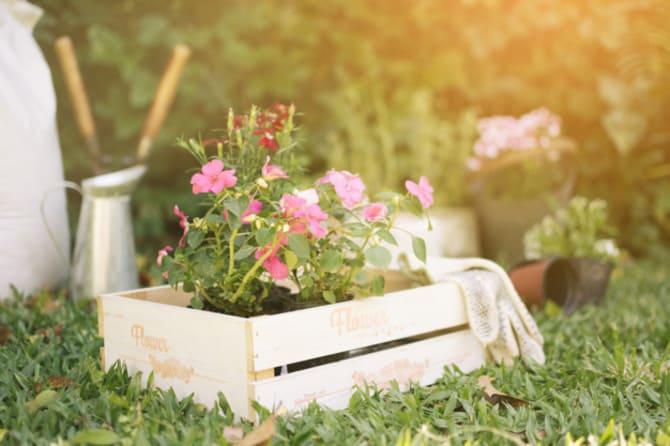 Фото высадки цветов