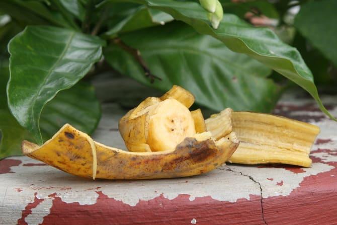 Фото банановой кожуры для цветов