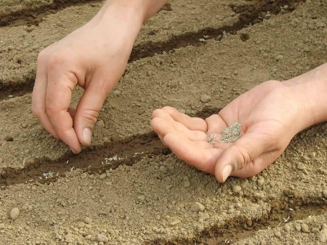 Фото посадки семян