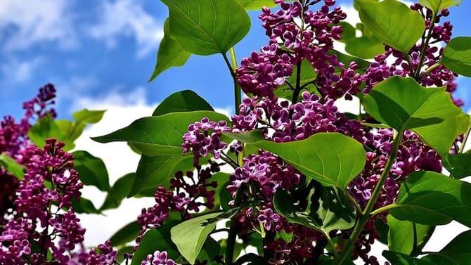 Фото цветения