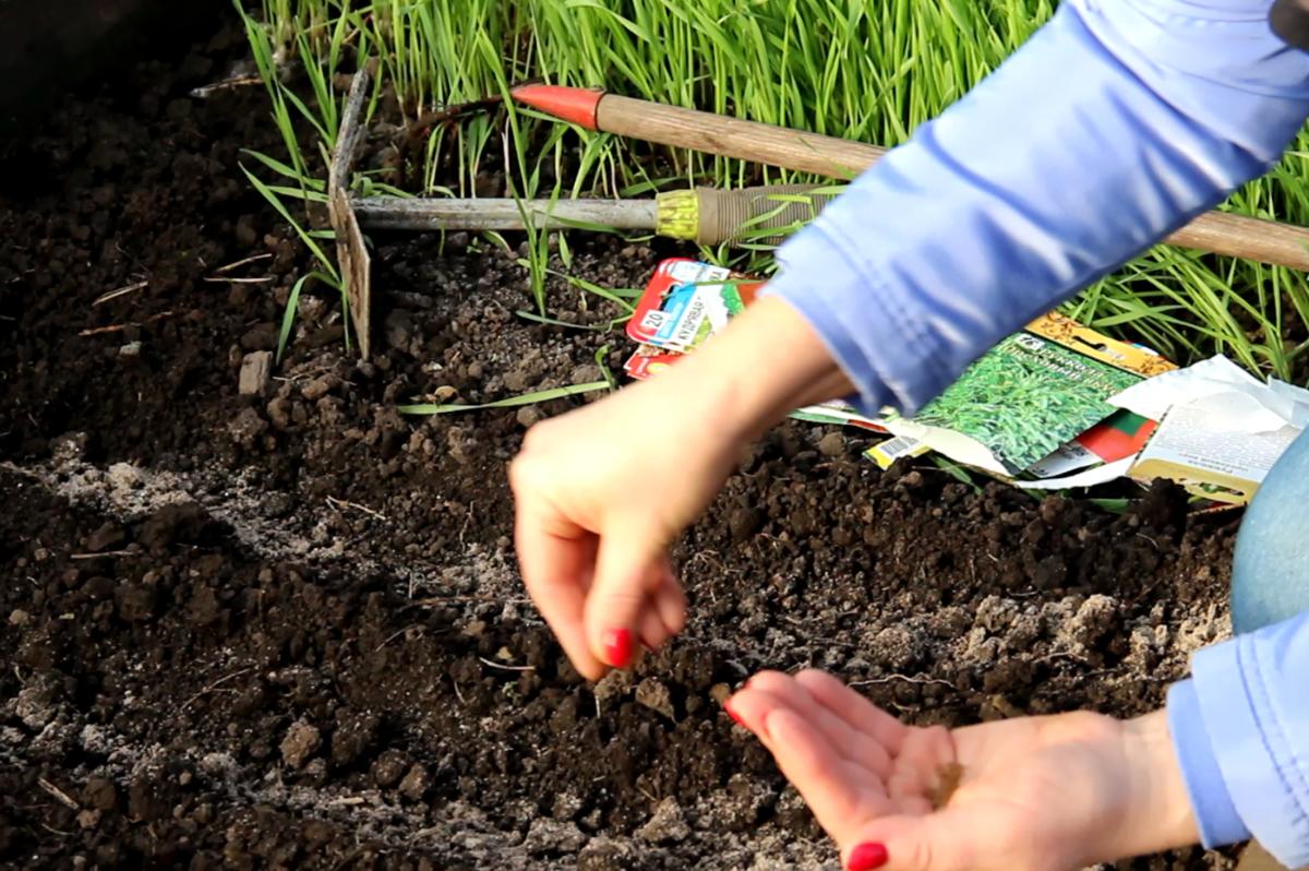 Работы в саду и огороде в июне 2021 года, что нужно сделать