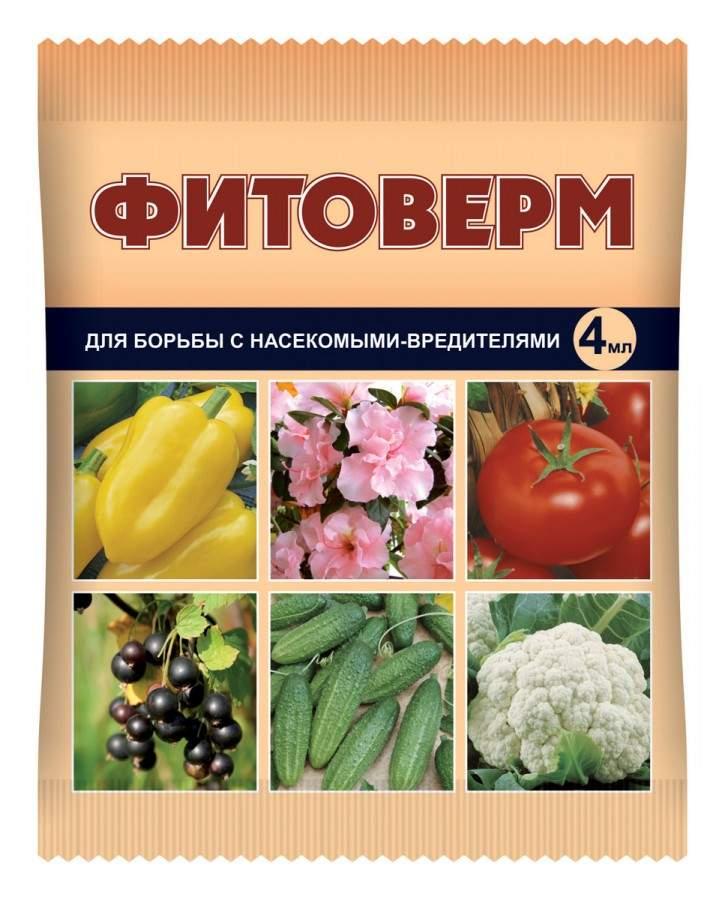 Как бороться с тлей на помидорах в теплице и в открытом грунте