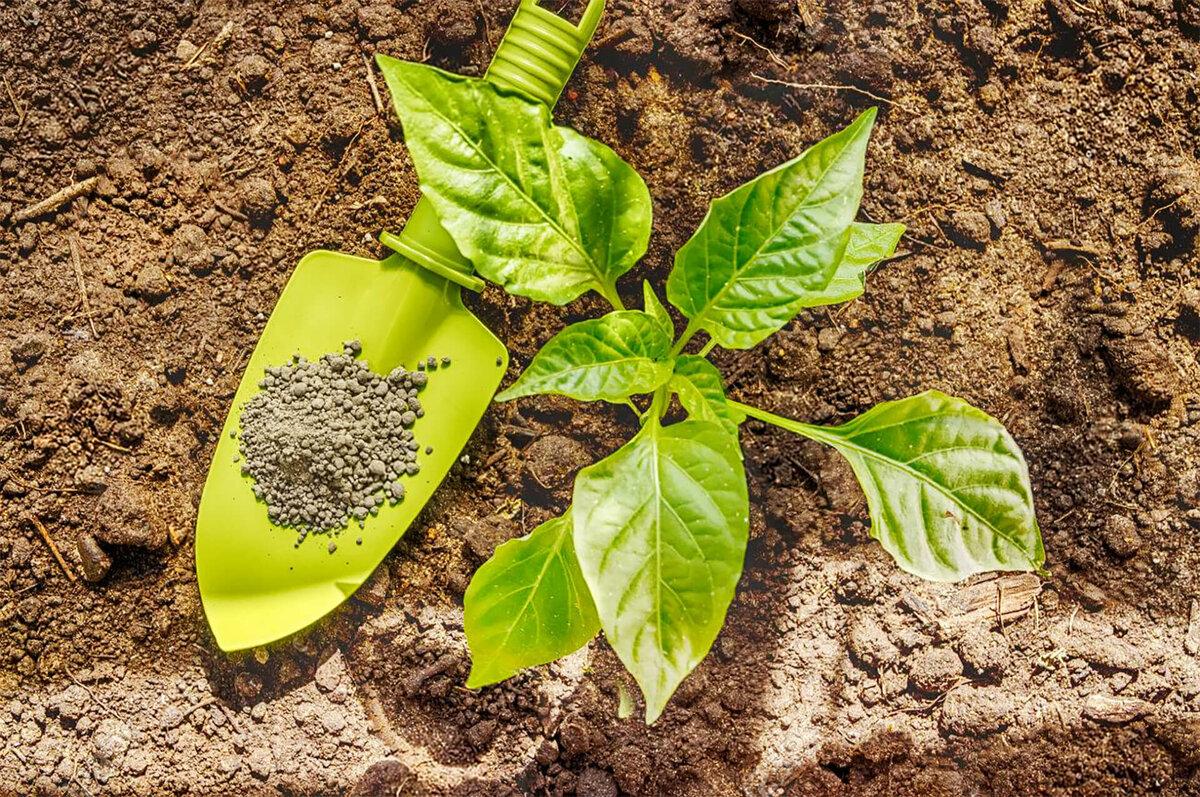 Почему желтеют листья у перцев в теплице и как с этим бороться