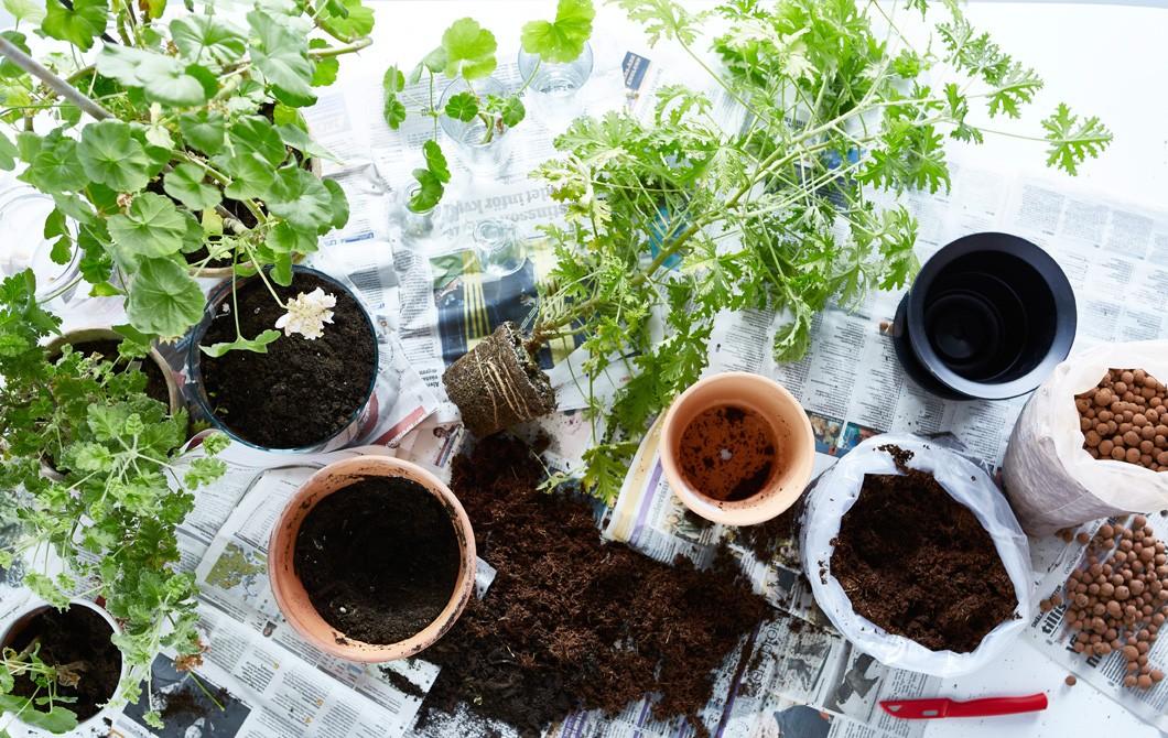 Пересадка комнатных растений по лунному календарю в августе 2021 года