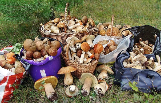 грибы в талдомском районе 2021 сейчас
