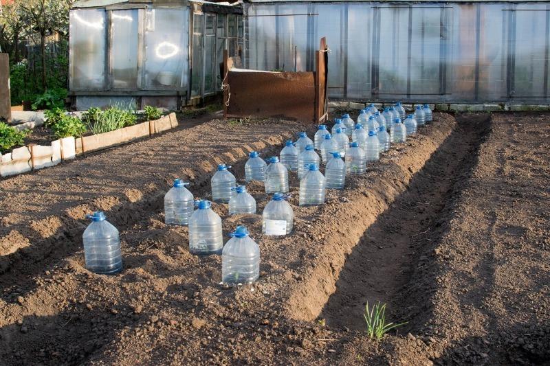 Как правильно укрыть клубнику на зиму в 2021 году