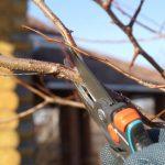 Как правильно обрезать грушу осень 2021 года