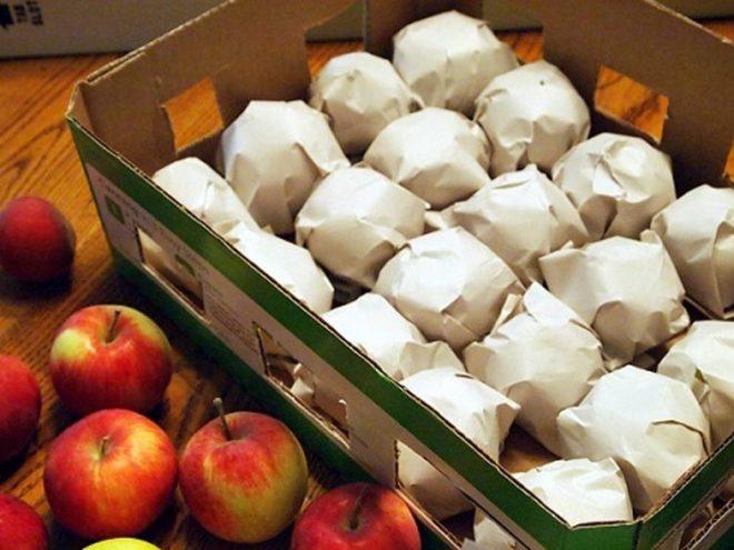 Когда собирать яблоки для хранения на зиму в 2021 году