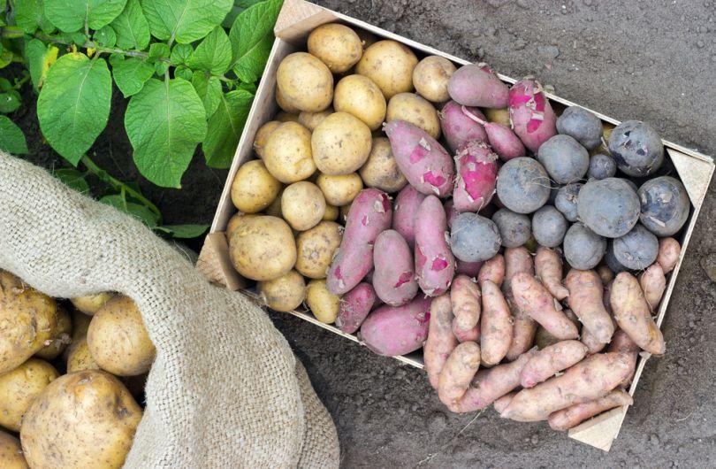 Как правильно хранить картофель зимой
