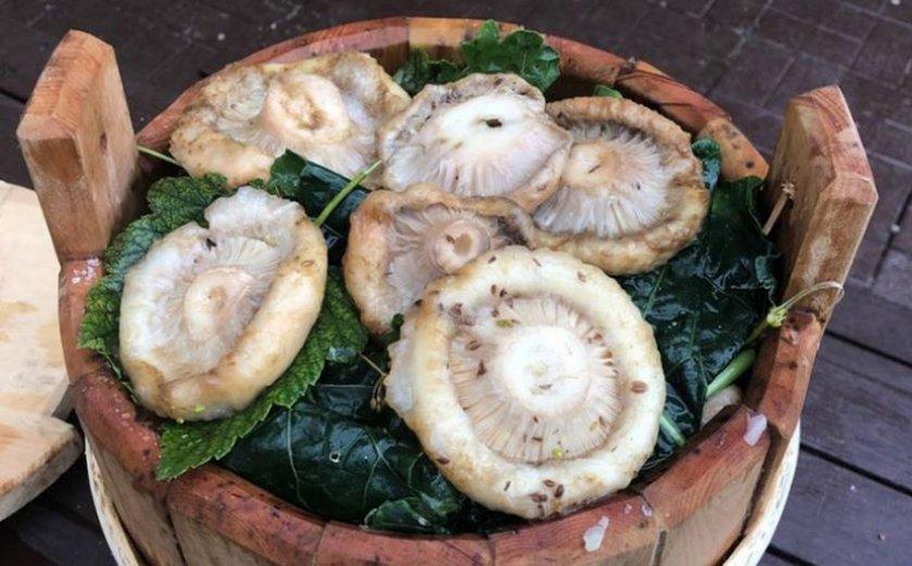 Как солить грибы на зиму в домашних условиях