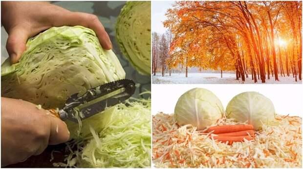 Капуста, морковь, осень