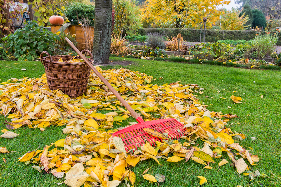 Посадочный календарь на октябрь 2021 года садоводов и огородников