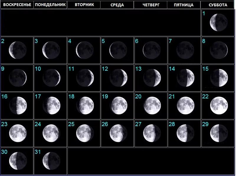 Когда сажать малину осенью 2021 года по лунному календарю