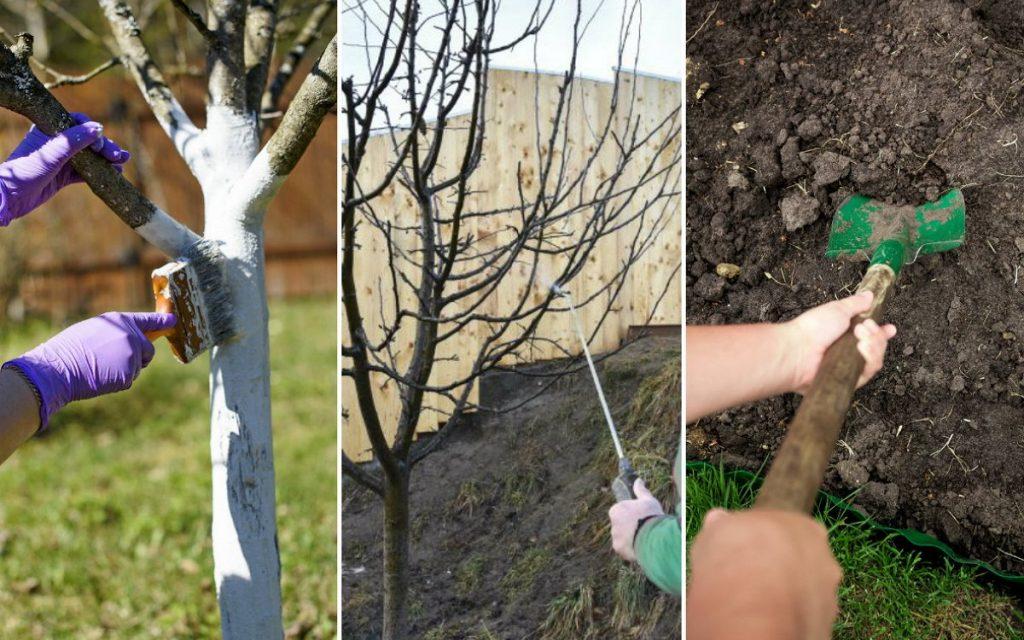 Обработка сада плодовых деревьев