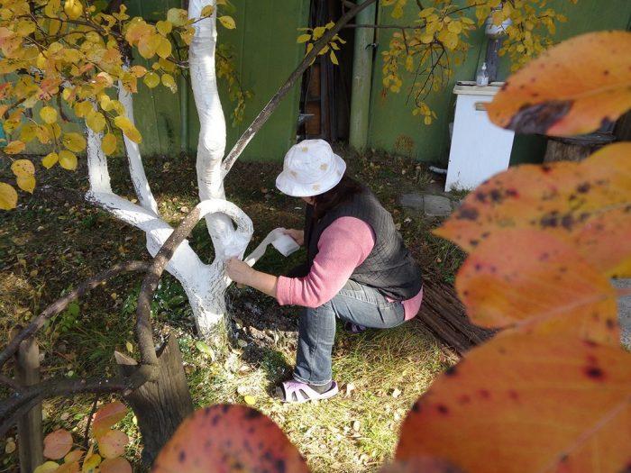 Побелить деревья осенью